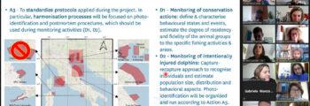 Foto-identificazione dei delfini: incontro online di BWI